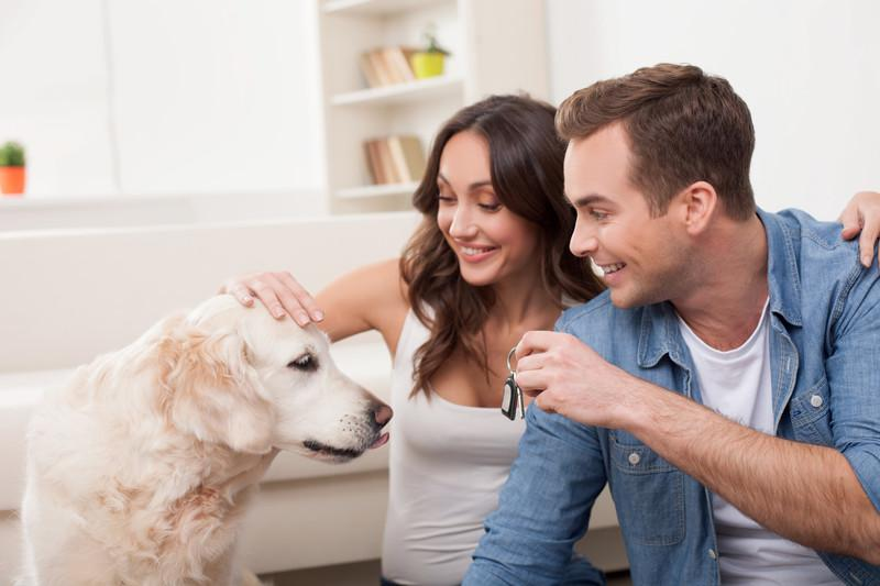 Help Your Pets Adjust To A New Home