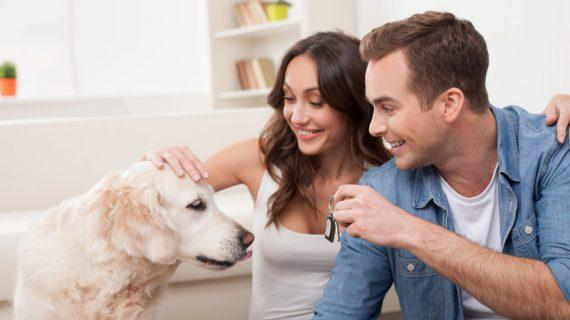 Tips To Help Your Pets Adjust To A New Home
